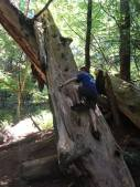 James tree climbing
