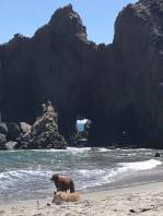 Pfeiffer Beach dogs